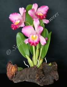 Cattleya #04, 13 x 9 inches, $195