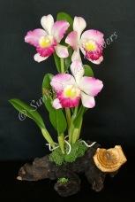 Cattleya #13, 12 x 8 inches, $195