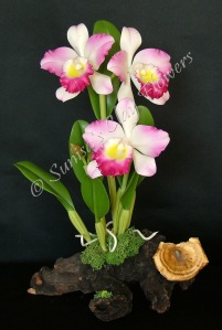 Cattleya #13, 12 x 8 inches, $195