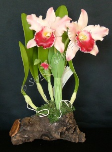 Cattleya #15, 14 x 8 inches, $195