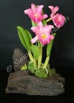 Cattleya #19, 7 x 4 inches, $55