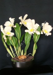 Cattleya #20, 23 x 21 inches, $325