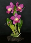 Cattleya #21, 11 x 6 inches, $195
