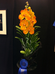 Maryland Orchid Society 1st Place Award 2012