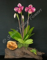 Paph. Lady Slipper #01, 17 x 11 inches, $185