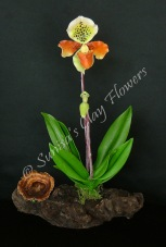 Paph. Lady Slipper #0213 x 9 inches $70