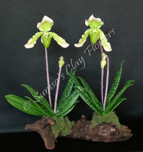 Paph. Lady Slipper #03, 12 x 13 inches, $195