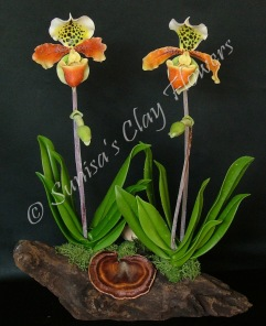 Paph. Lady Slipper #0414 x 10 inches $185