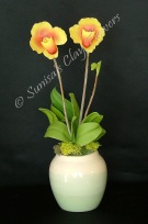 (SOLD OUT) Paph. Lady Slipper #0513 x 5 inches$70