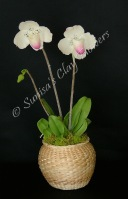 Paph. Lady Slipper #07 12 x 6 inches $70