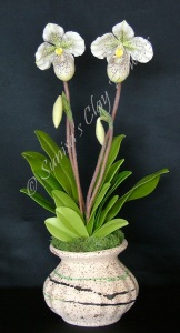 Paph. Lady Slipper #10 16 x 8 inches $165