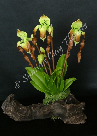 Paph. Lady Slipper #14 7 x 9 inches $55