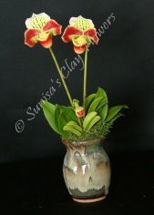 Paphiopedilum Lady Slipper #18, 8 x 4 inches, $40