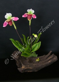 Paphiopedilum Lady Slipper #19, 9 x 7 inches, $45