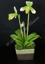 Paphiopedilum Lady Slipper #21, 7 x 4 inches, $40