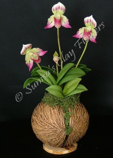 Paphiopedilum Lady Slipper #22, 9 x 5 inches, $55