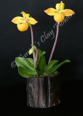 (SOLD OUT) Paphiopedilum Lady Slipper #23, 8 x 5 inches, $40