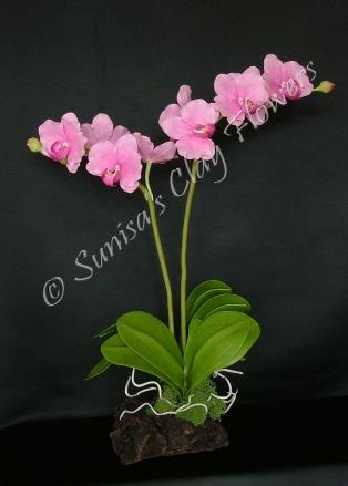 Phalaenopsis #01, 20 x 17 inches, $265