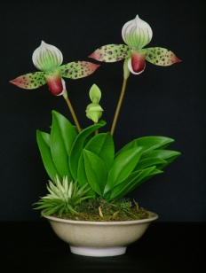 Paph. Lady Slipper #30 $45