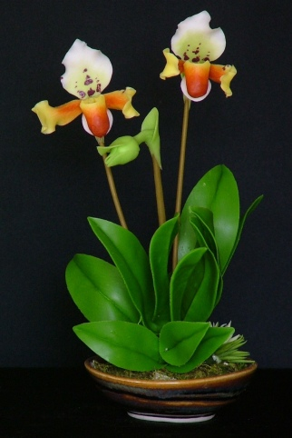 Paph. Lady Slipper #29 $45