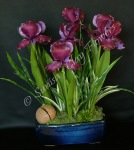 Iris #01, 15 x 13 inches