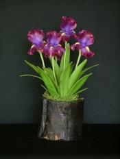 Iris #06 $55