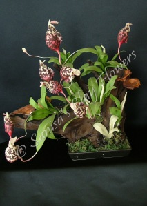 (SOLD OUT) Pitcher Plant #01, 14 x 14 inches