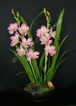 (SOLD OUT) Cymbidium #08, 21 x 12 inches, $245