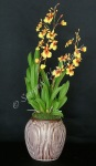Oncidium# 02, 14 x 5 inches