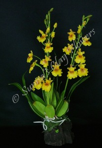 Oncidium# 03, 14 x 8 inches, $70